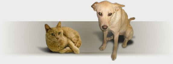 Dog Rescue, Cat Rescue, Akron, Summit County, Ohio - Haven